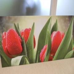 Фотохолст с тюльпанами