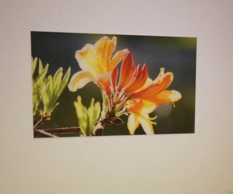 Fotoklaas lillega / Pilt ja paigaldus: Allan A. Abramson, Abramexx Studio